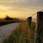 Haiku on Friday – Dune path